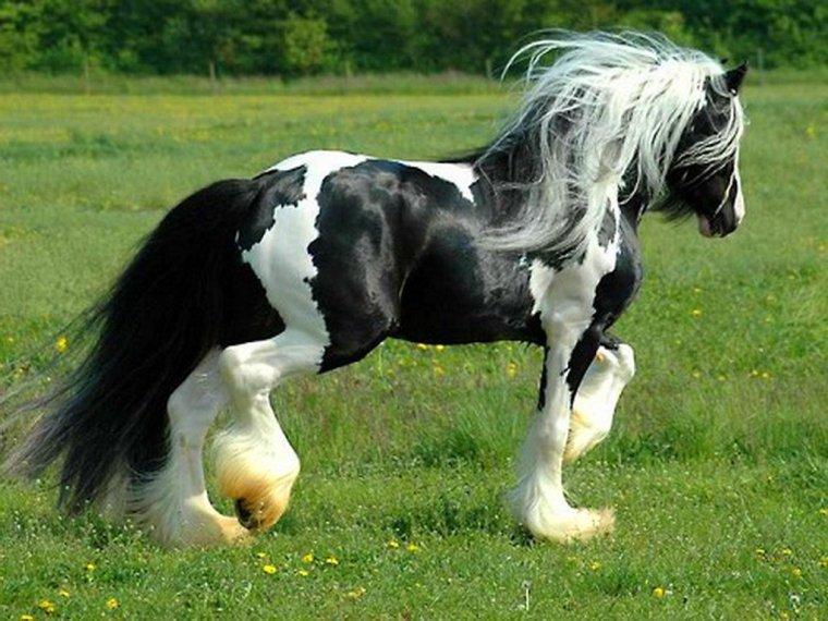 Le cheval en noir et blanc....