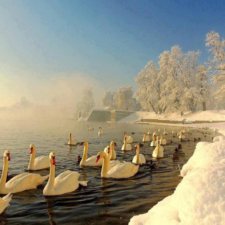 Le lac des cygnes....