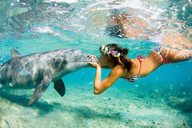 Le dauphin....