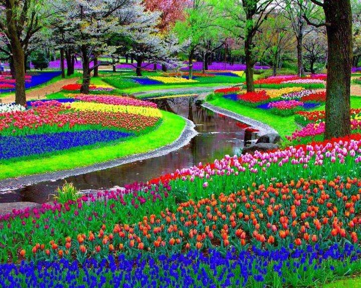 7 millions de tulipes sur 32 hectares! Keukenhof, Lisse, Pays-Bas....