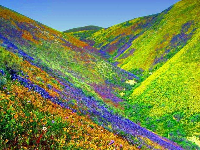 Vallée des fleurs, Uttarakhand, en Inde....
