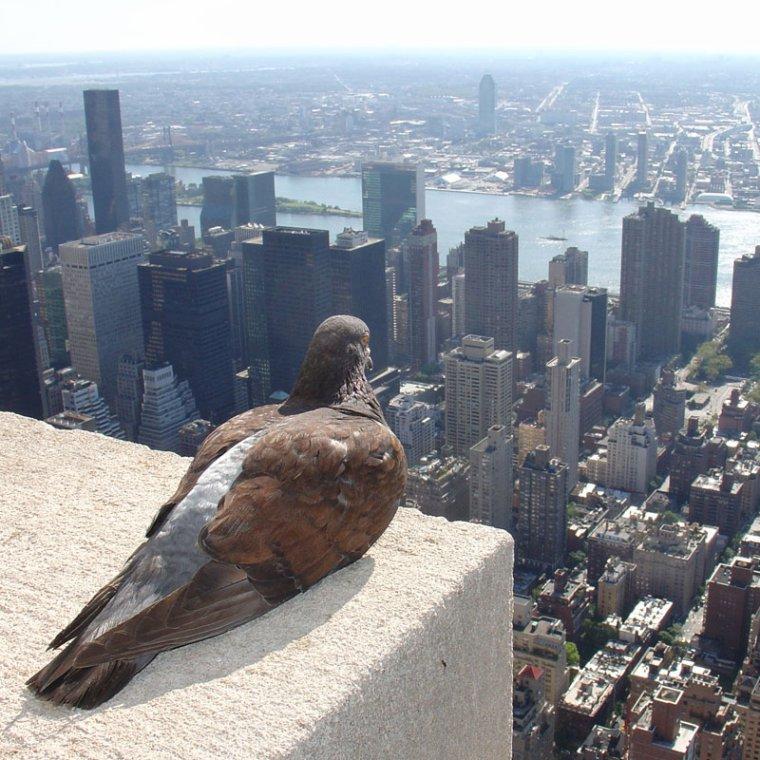 Je veille sur New-York, U.S.A.....