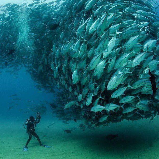 Sommes toutes, un moment de magie pour ce plongeur....