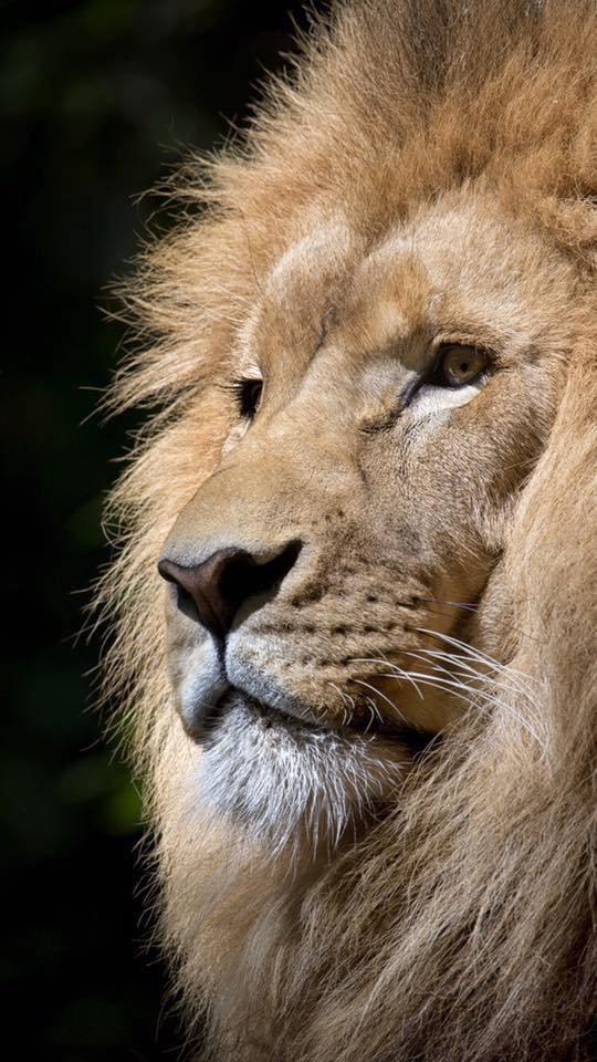 Le Roi....