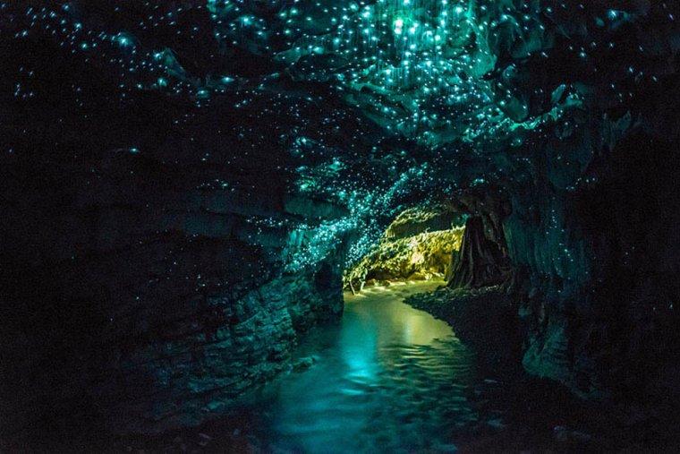 Les Waitomo Glowworm Caves,  Nouvelle-Zélande.......