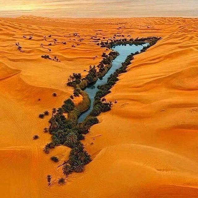 Oasis. Le désert de libian,,,