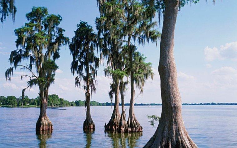 le cyprés-chauve-parc National-�Éverglades en Floride, USA.....
