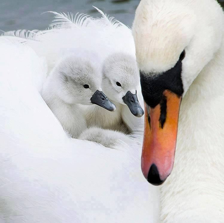 L'amour d'une mère....