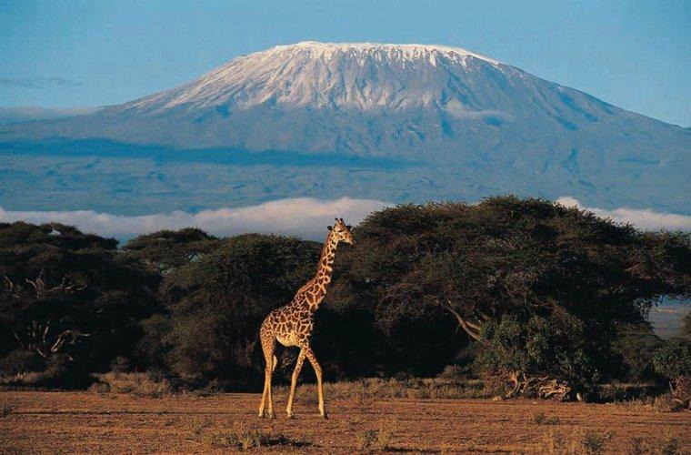 le Kilimandjaro, Tanzanie, Afrique...