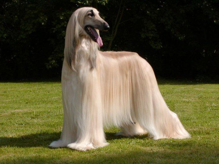 Le chien.....