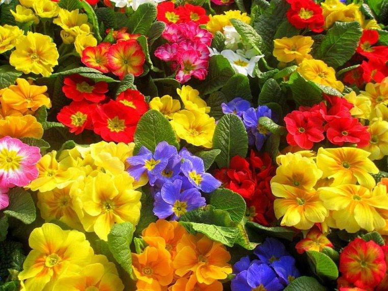 Bonjour les couleurs de l'été......