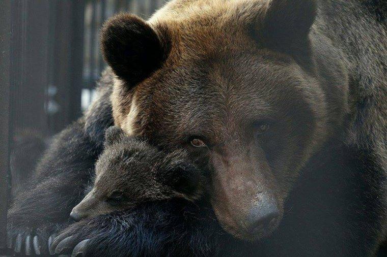 Maman ours.............. et bébé......