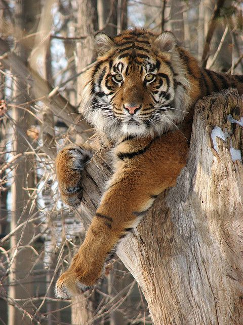 Sur un arbre perché......