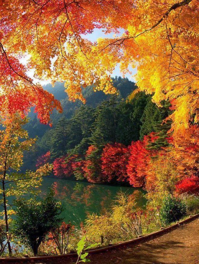 Petit morceau d'automne......