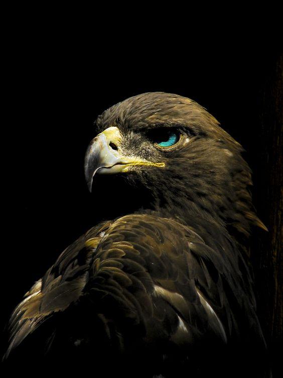 L' Aigle D'or....