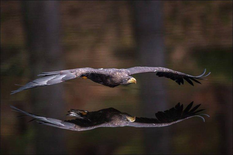 Réflexion d'aigle....
