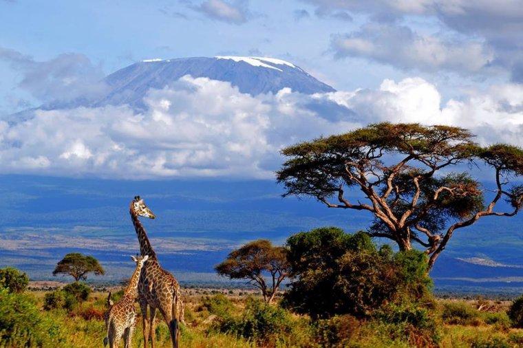 Le Kilimandjaro, toit de l'Afrique,Tanzanie...