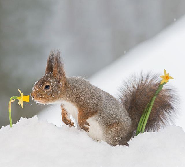Oups, déjà des fleurs dans cette neige......