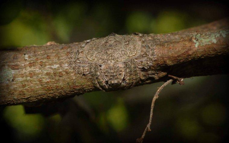 C'est une araignée sur cette branche...
