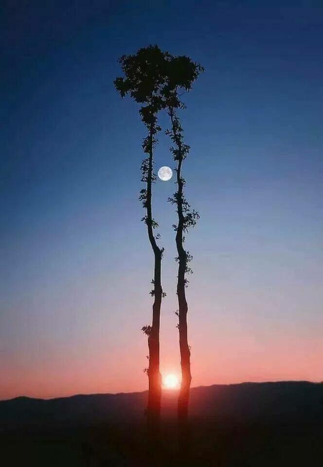 Soleil et Lune où peut-être Lune et Soleil....