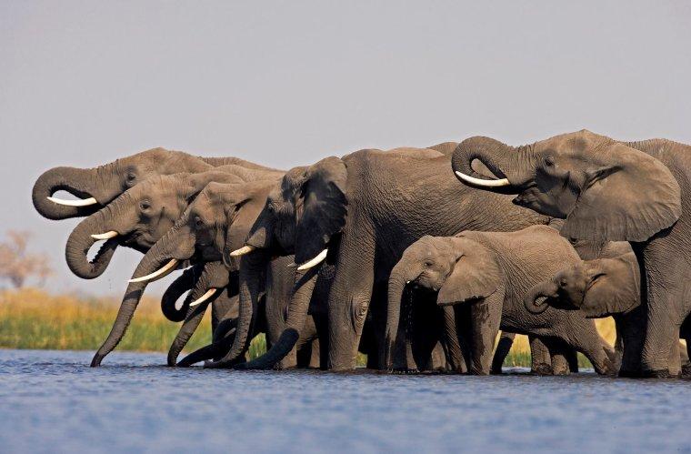 Les éléphants vivent en communauté très soudé.....