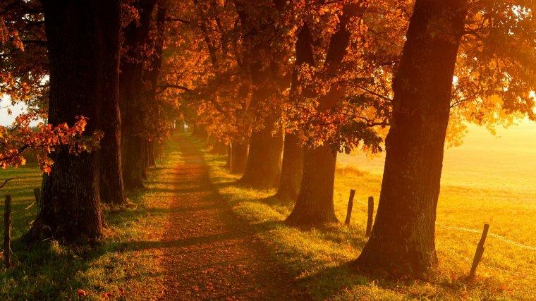 Quand jaune rime avec automne....