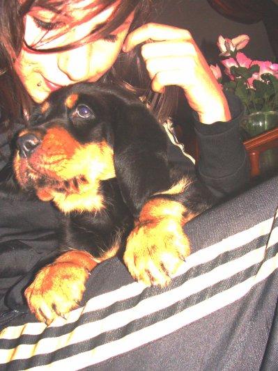 mOn iDio de petit chien (l)
