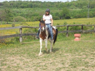 « Travailler avec les chevaux, c'est travailler avec du vivant. »