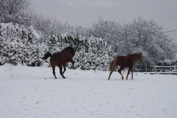 Neige et re-neige !