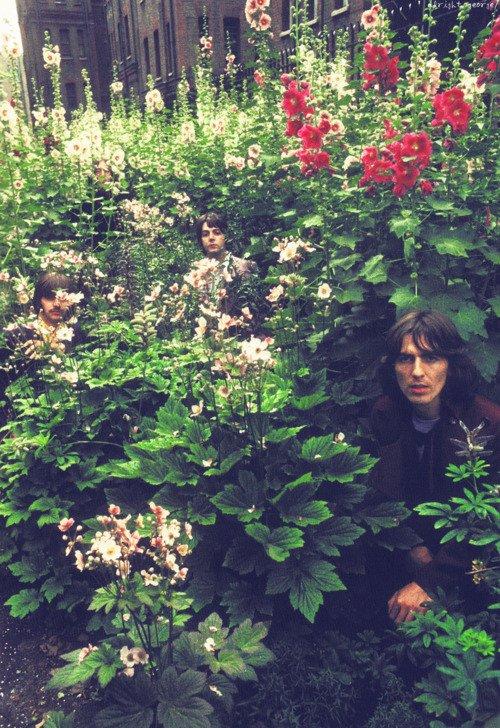 Les Beatles font cache-cache