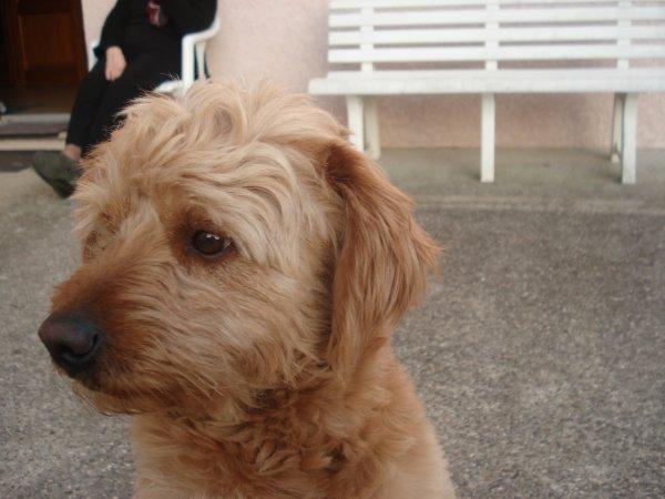 mes chien filou et ugoline