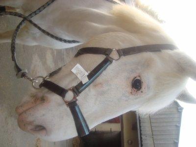 description  de  mon  amour  de  poney  ALTESSE