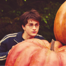 Photo de HarryPotter-Hogwarts