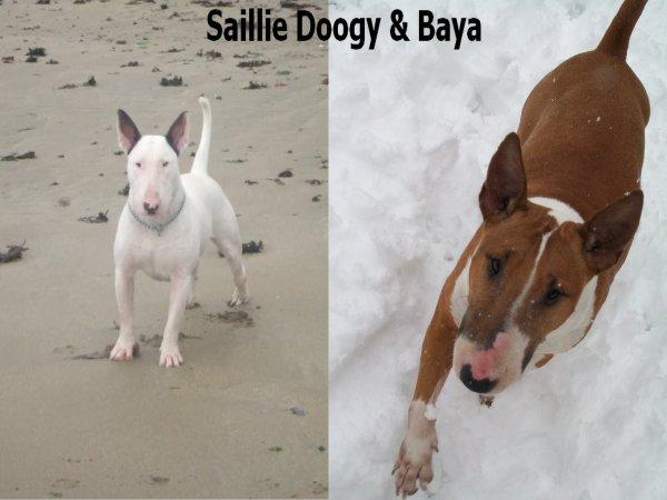Saillie Doogy & Baya