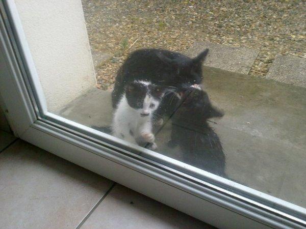 mon chat adorer