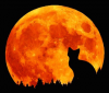 Lueur-de-Lune