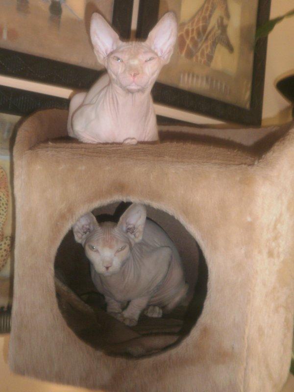 AZIA & MAYA