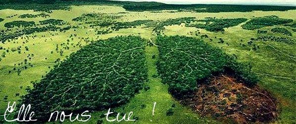 LA DEFORESTATION.