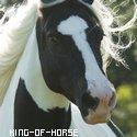 Photo de King-of-horse