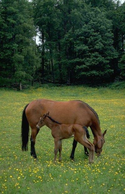 aime tu les chevaux