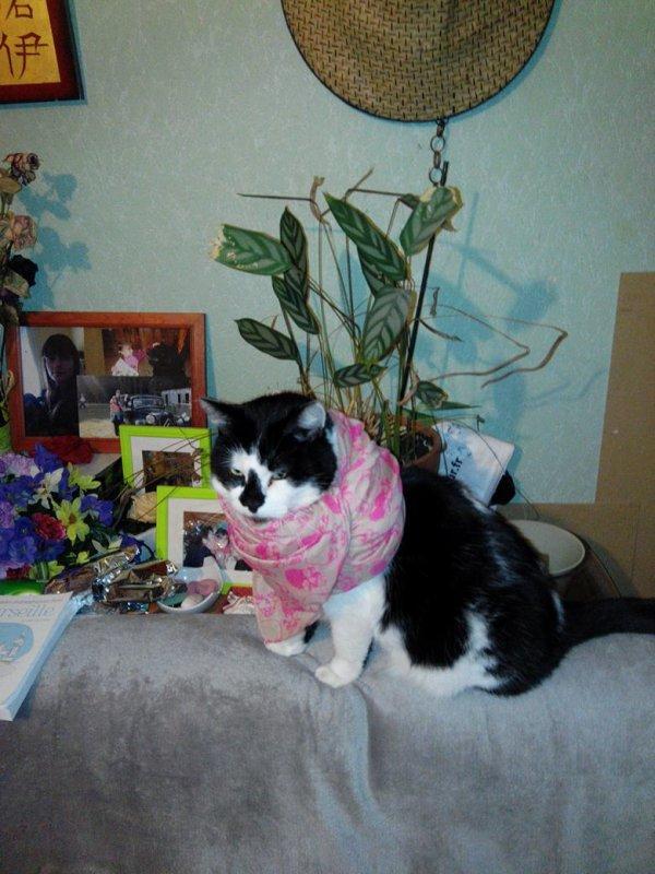 Mon chat cheyen aka duc : nouveau look~