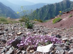 Valberg Trail 2015 – Turquoise-Océane 2ème Féminine, Sébastien Robert 3ème Senior
