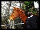 Photo de osfour-le-minifour