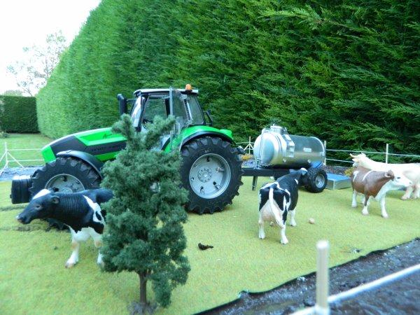 On apporte à boire aux vaches !