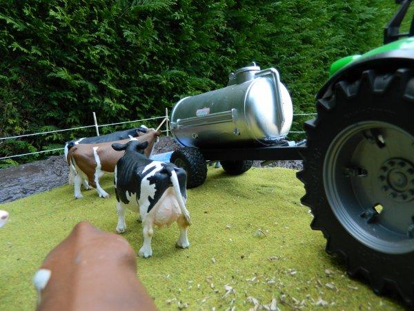 On apporte a boire aux vaches ...