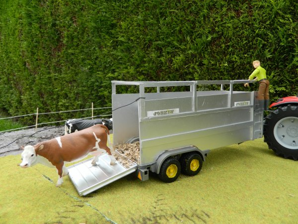 On sort les vaches avec ce beau temps :