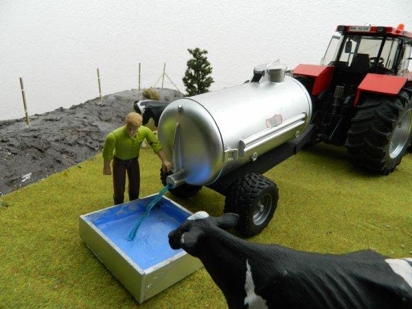 On apporte de l'eau aux vaches :