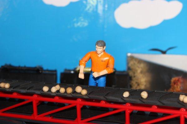 Stockage des pommes de terre à la ferme :