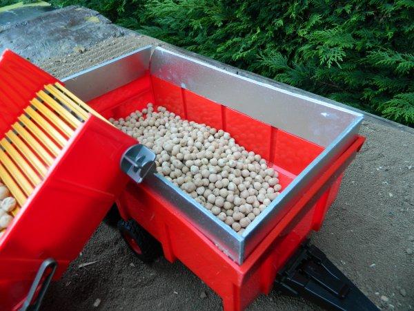 Arrachage de pommes de terre à la ferme ...