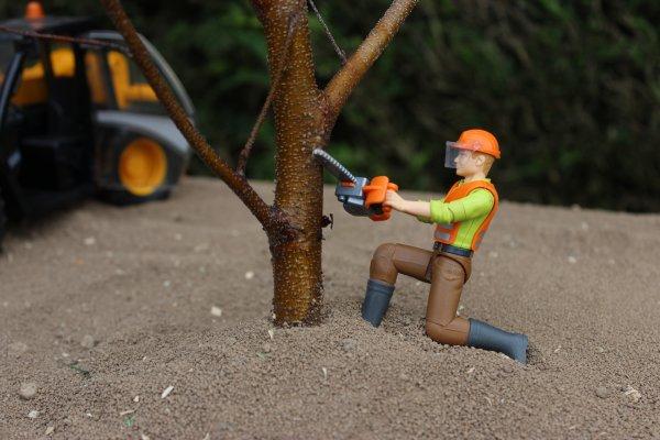Élagage d'arbre en ce moment